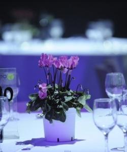 צילומי חתונה מקום (4)